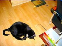 Blacky beim Spielen