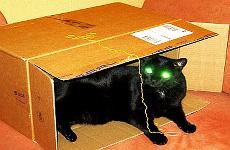 Blacky im Karton