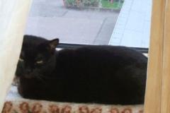 Blacky am Fenster