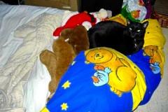 Blacky im Bett