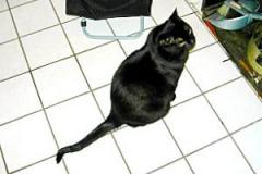 Blacky wartet auf sein Essen