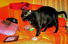 Blacky auf der Couch
