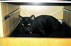 Blacky im Schrank